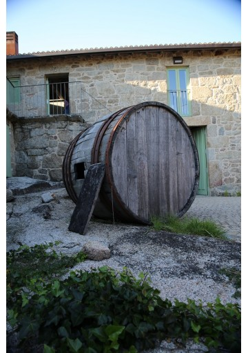 Cuñas Experience for Wine Lovers